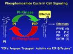 phosphoinositide cycle in cell signaling