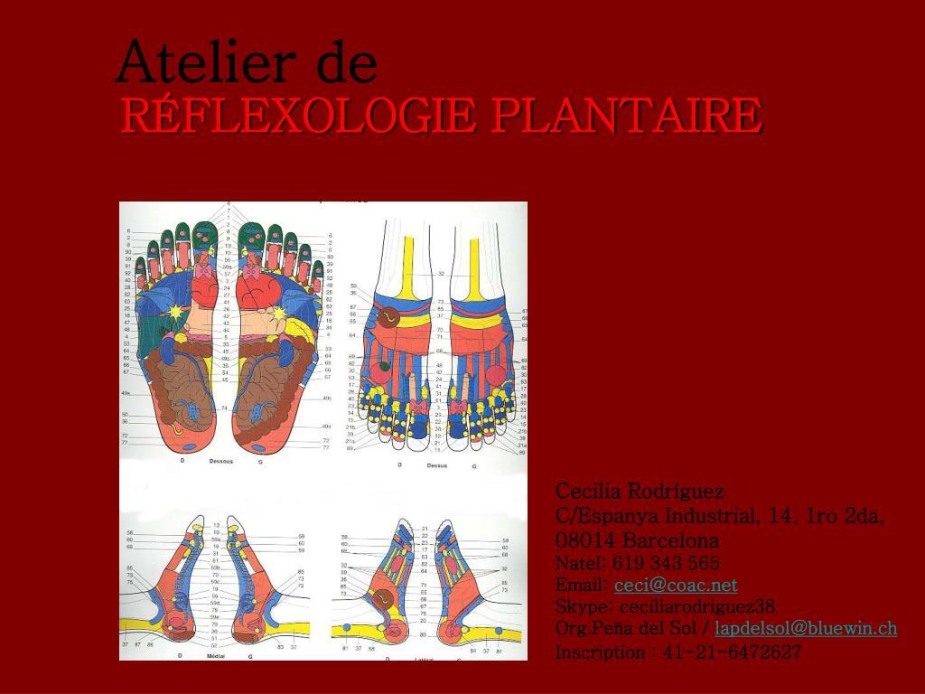 r flexologie plantaire l.