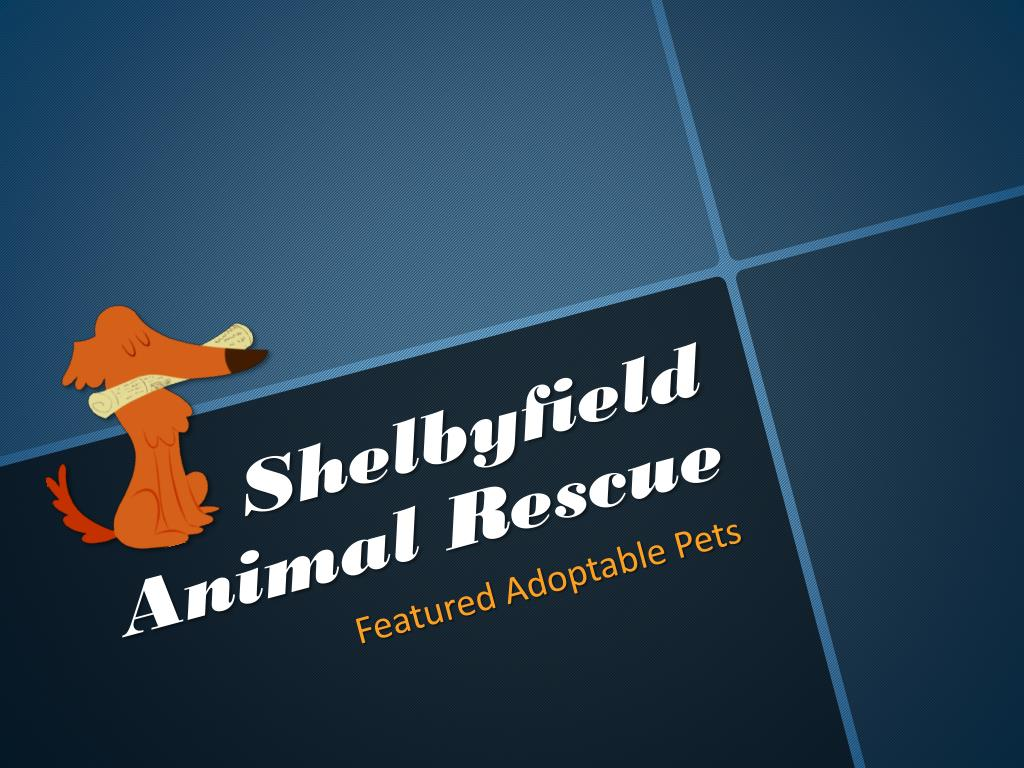 shelbyfield animal rescue l.