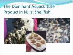 the dominant aquaculture product in nj is shellfish
