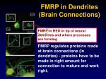 fmrp in dendrites brain connections