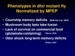 phenotypes in dfxr mutant fly normalized by mpep