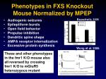 phenotypes in fxs knockout mouse normalized by mpep