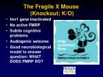 the fragile x mouse knockout k o