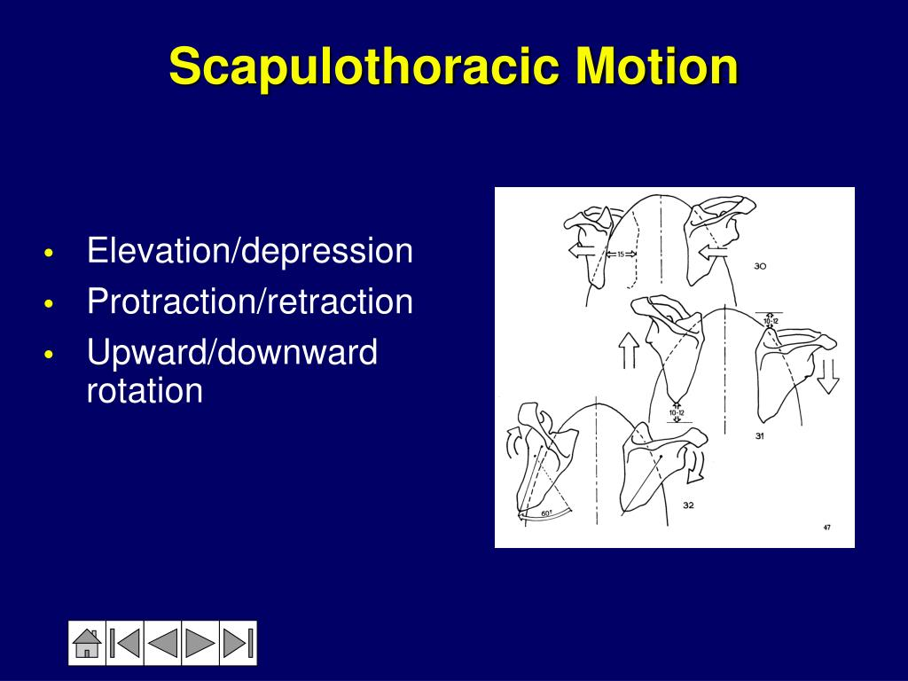 PPT - Anatomy & Biomechanics of the Shoulder PowerPoint ...