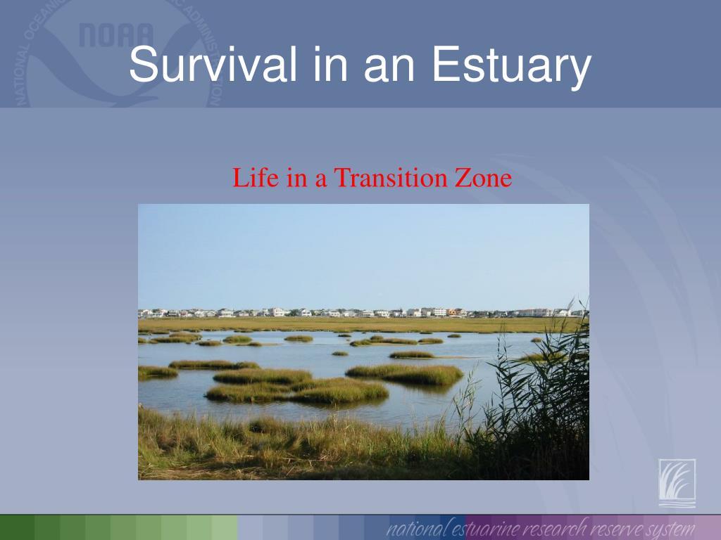 survival in an estuary l.