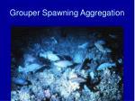 grouper spawning aggregation