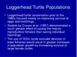loggerhead turtle populations
