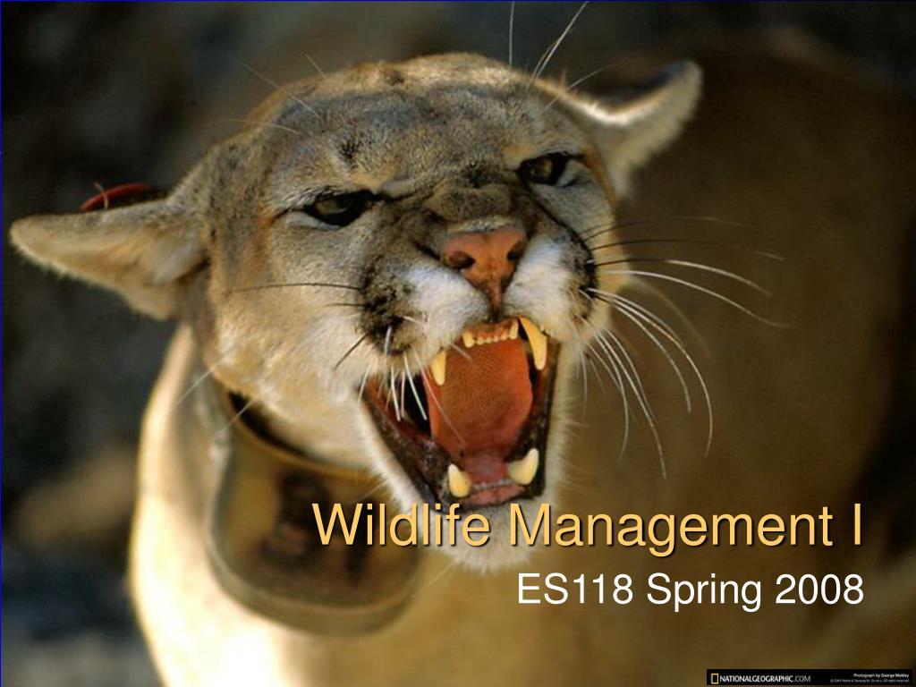 wildlife management i l.