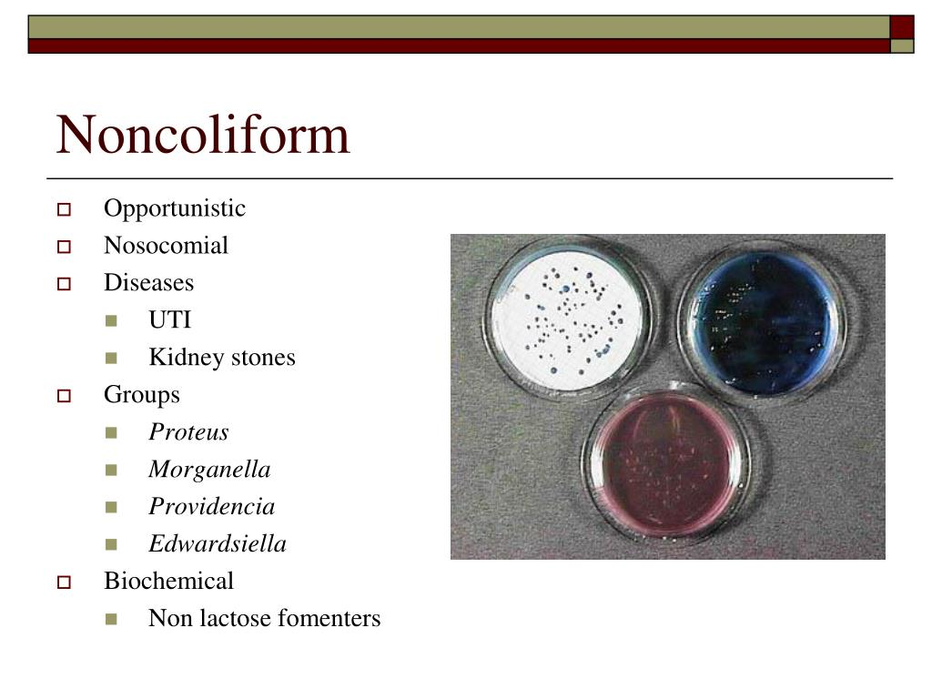 Noncoliform