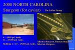 2008 north carolina sturgeon for caviar27