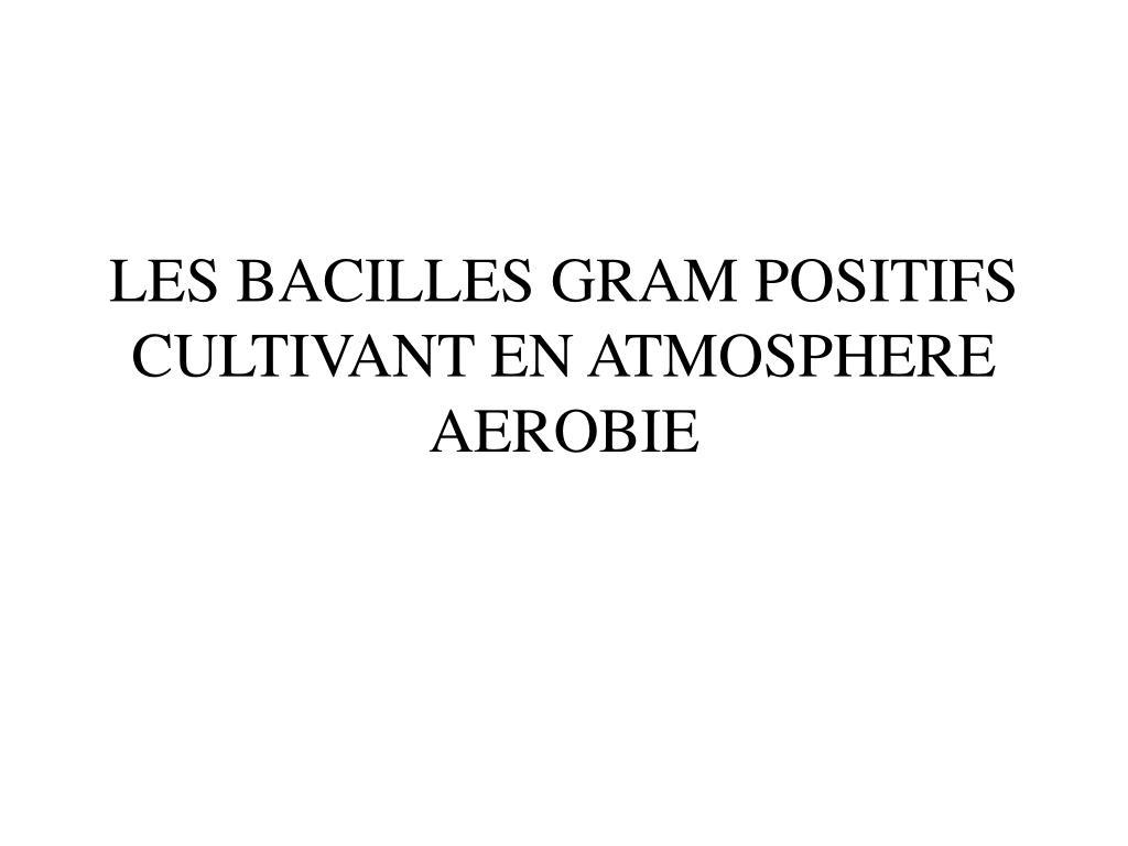 les bacilles gram positifs cultivant en atmosphere aerobie l.