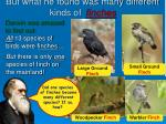 but what he found was many different kinds of finches