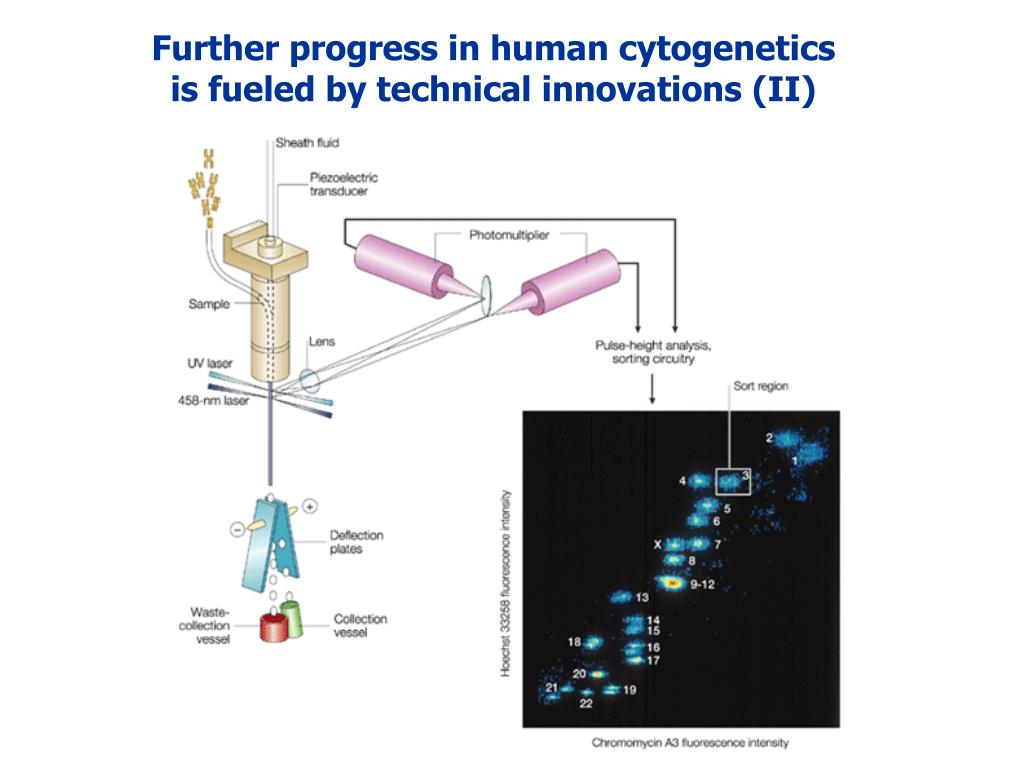 Further progress in human cytogenetics