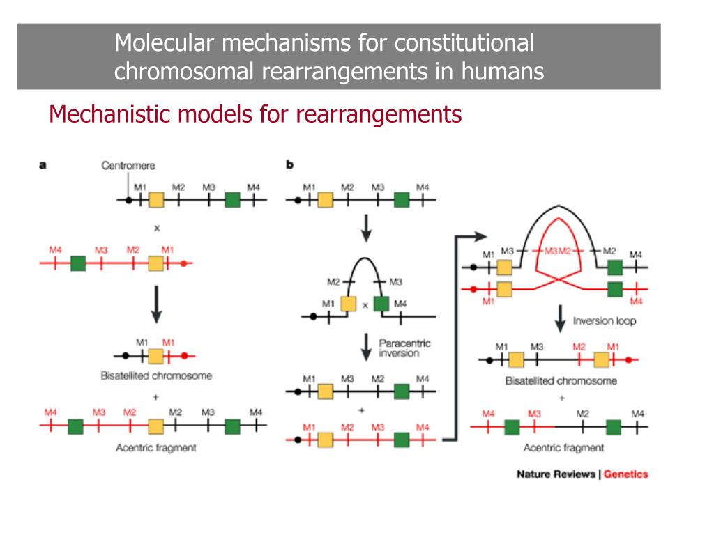 Molecular mechanisms for constitutional