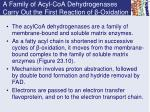 a family of acyl coa dehydrogenases carry out the first reaction of oxidation