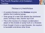 the fourth reaction of oxidation thiolase