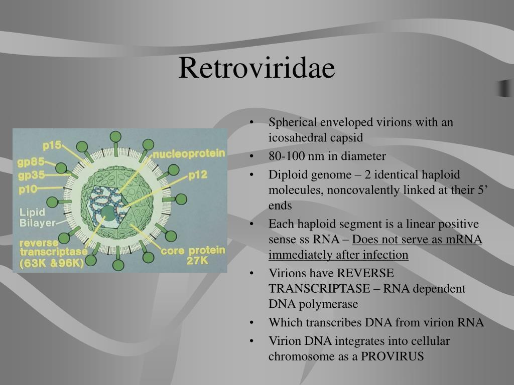retroviridae l.