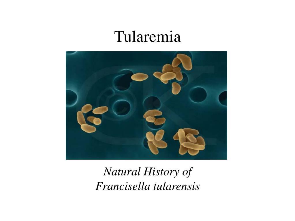 natural history of francisella tularensis l.