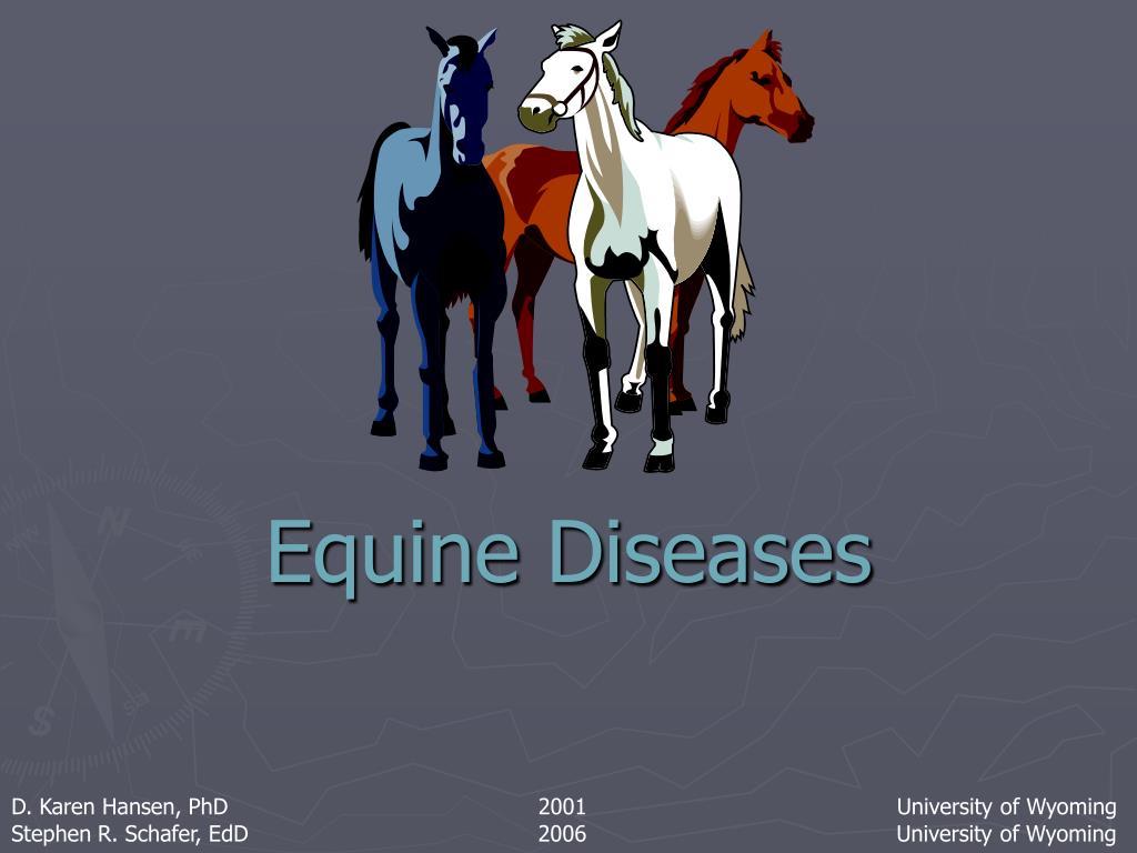 equine diseases l.