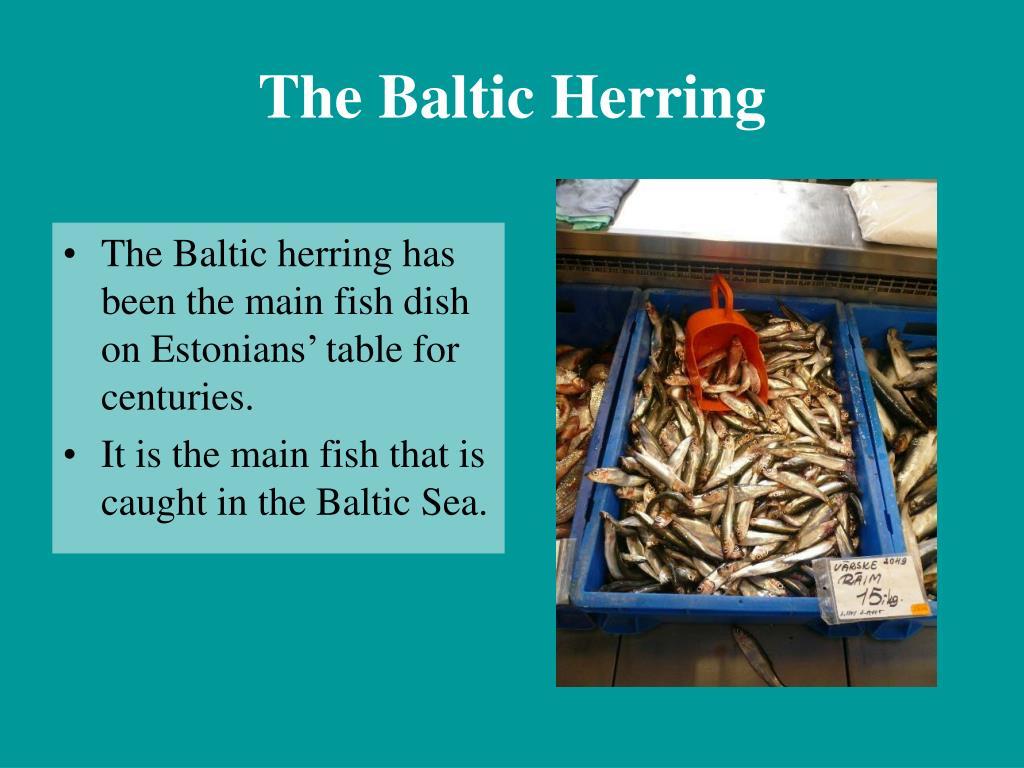 The Baltic Herring