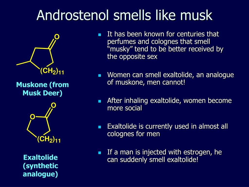 Androstenol smells like musk