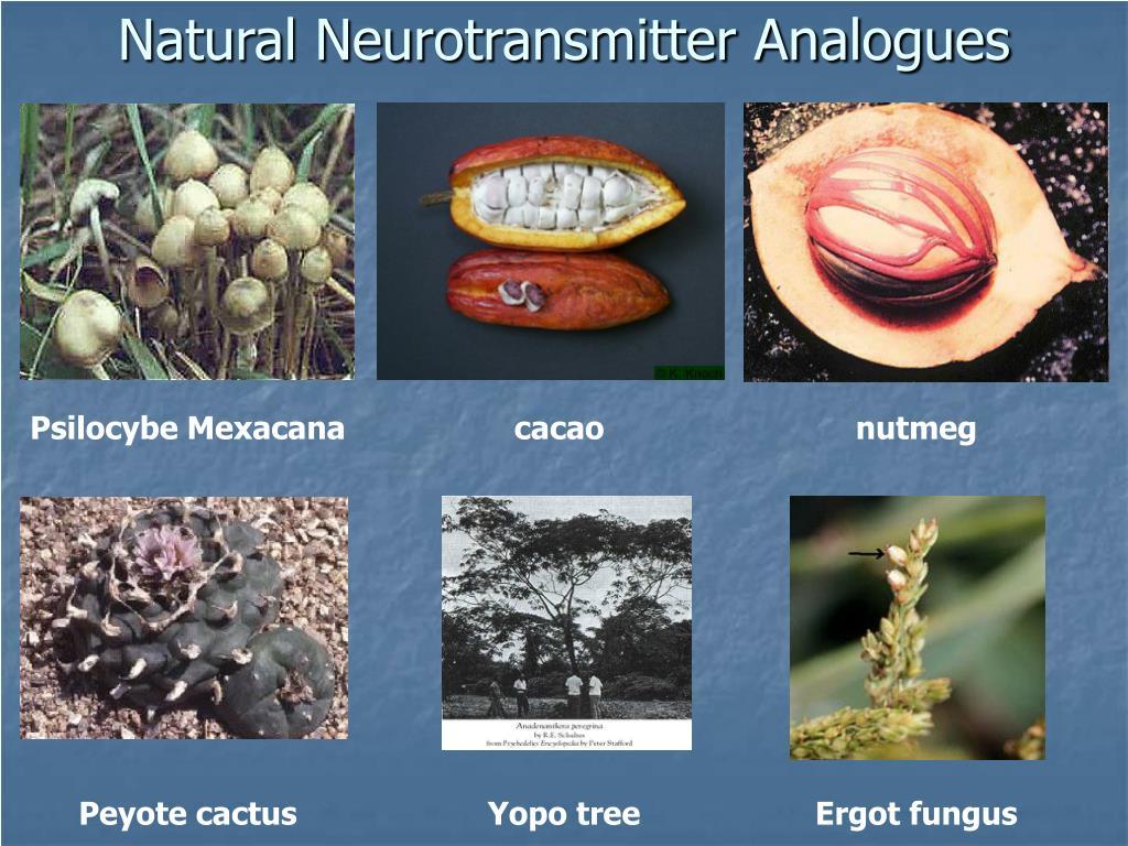 Natural Neurotransmitter Analogues