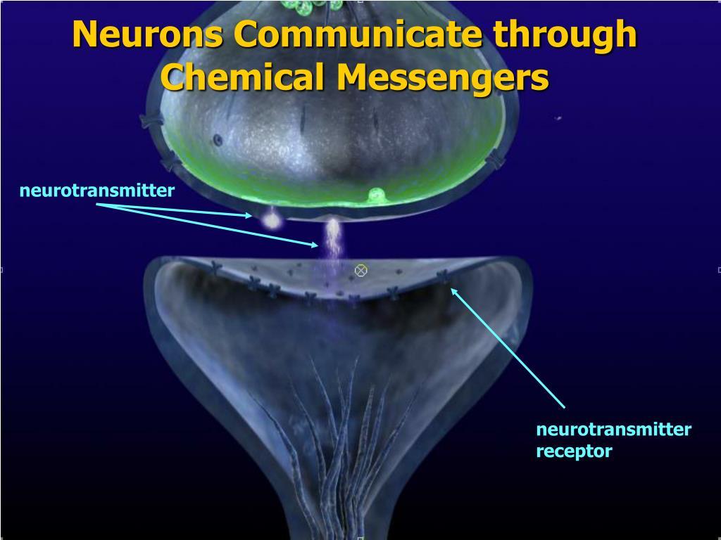 Neurons Communicate through Chemical Messengers