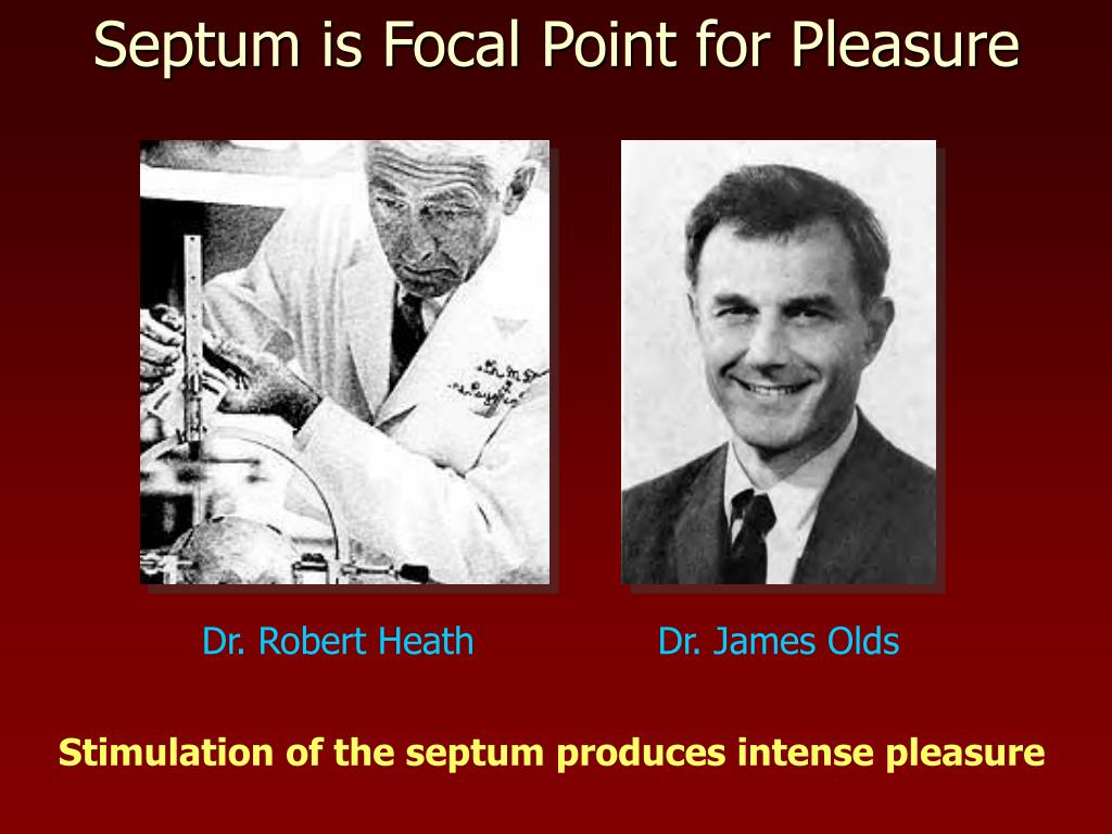Septum is Focal Point for Pleasure