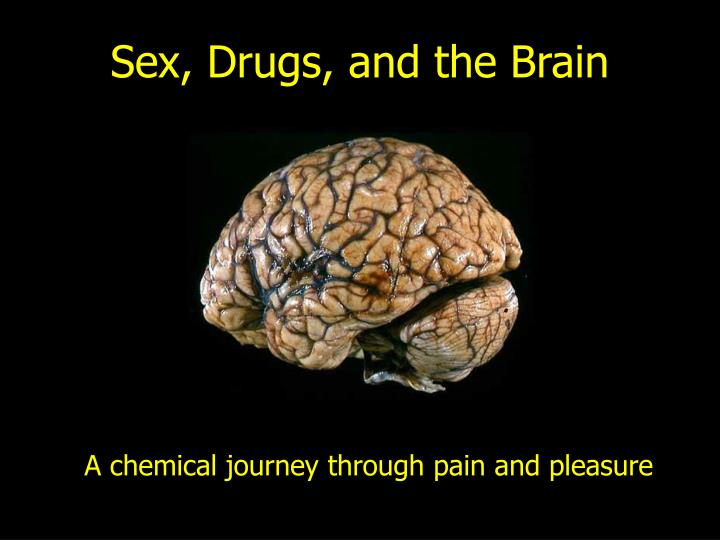 Sex drugs and the brain