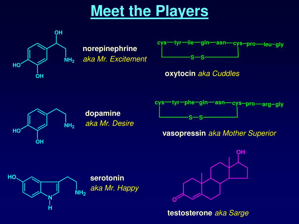 Meet the Players
