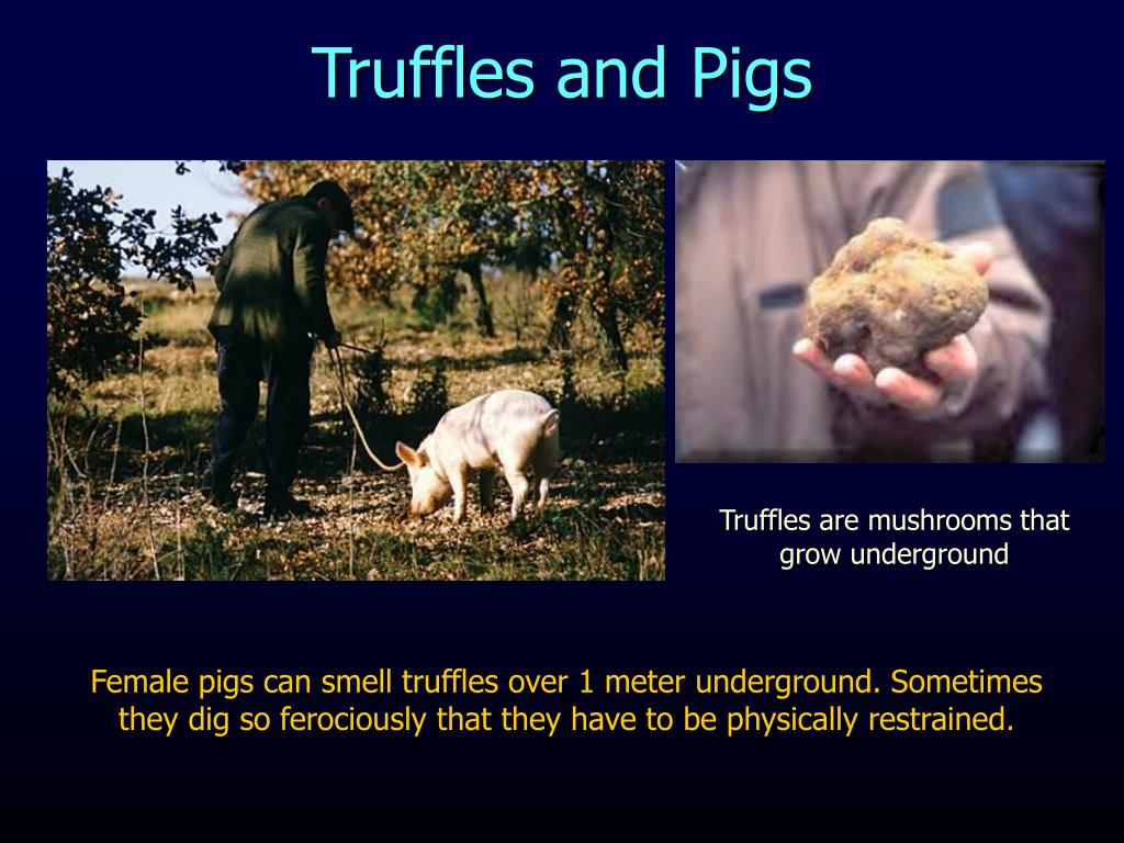 Truffles and Pigs