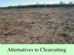 alternatives to clearcutting