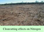 clearcutting effects on nitrogen