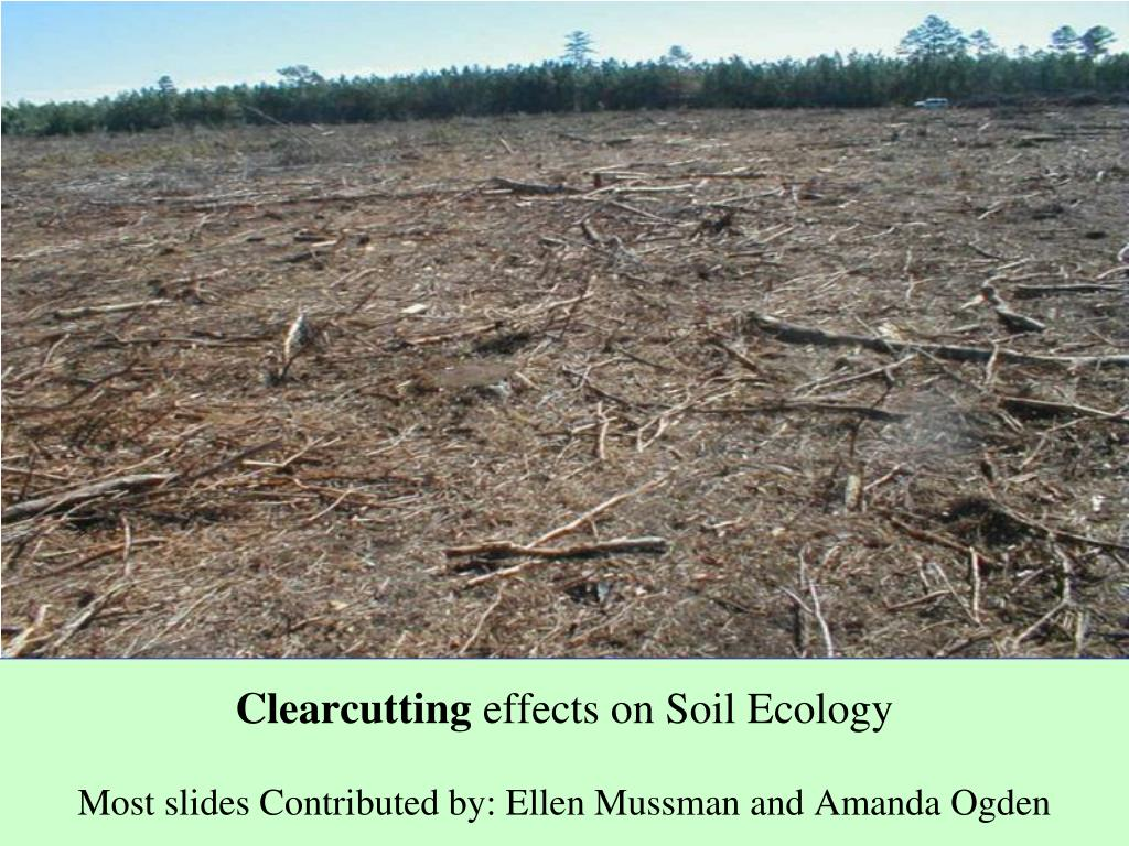 clearcutting effects on soil ecology most slides contributed by ellen mussman and amanda ogden l.