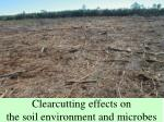 clearcutting effects on the soil environment and microbes