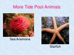 more tide pool animals