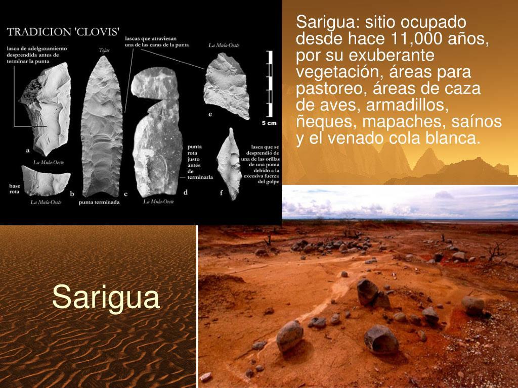 Sarigua: sitio ocupado desde hace 11,000 años,  por su exuberante vegetación, áreas para pastoreo, áreas de caza de aves, armadillos, ñeques, mapaches, saínos y el venado cola blanca.