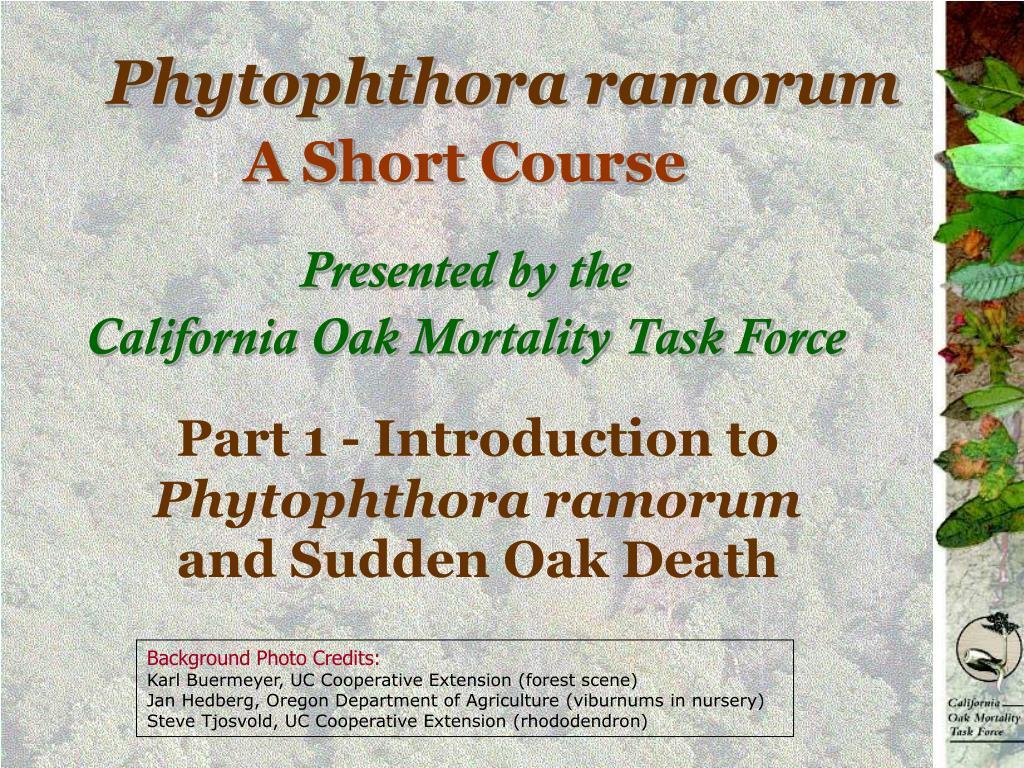phytophthora ramorum l.