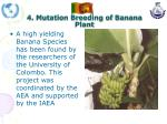 4 mutation breeding of banana plant