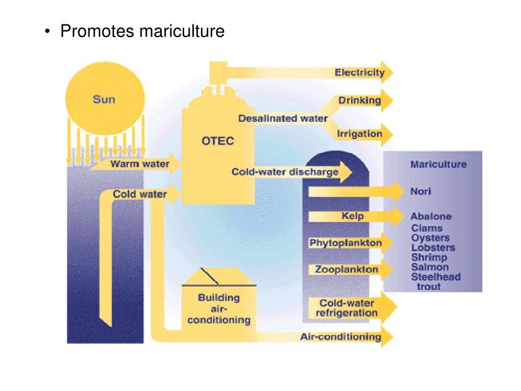Promotes mariculture