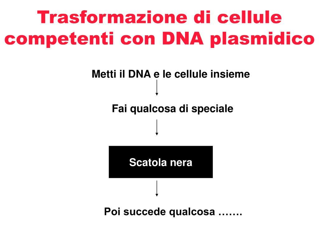 trasformazione di cellule competenti con dna plasmidico l.