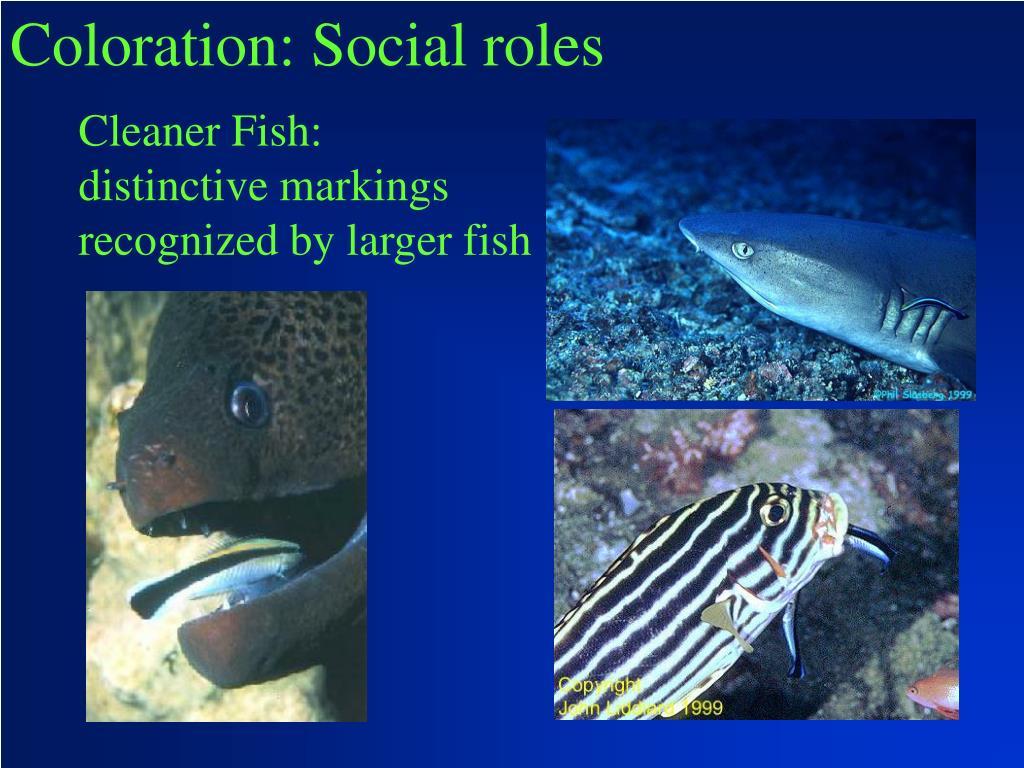 Coloration: Social roles
