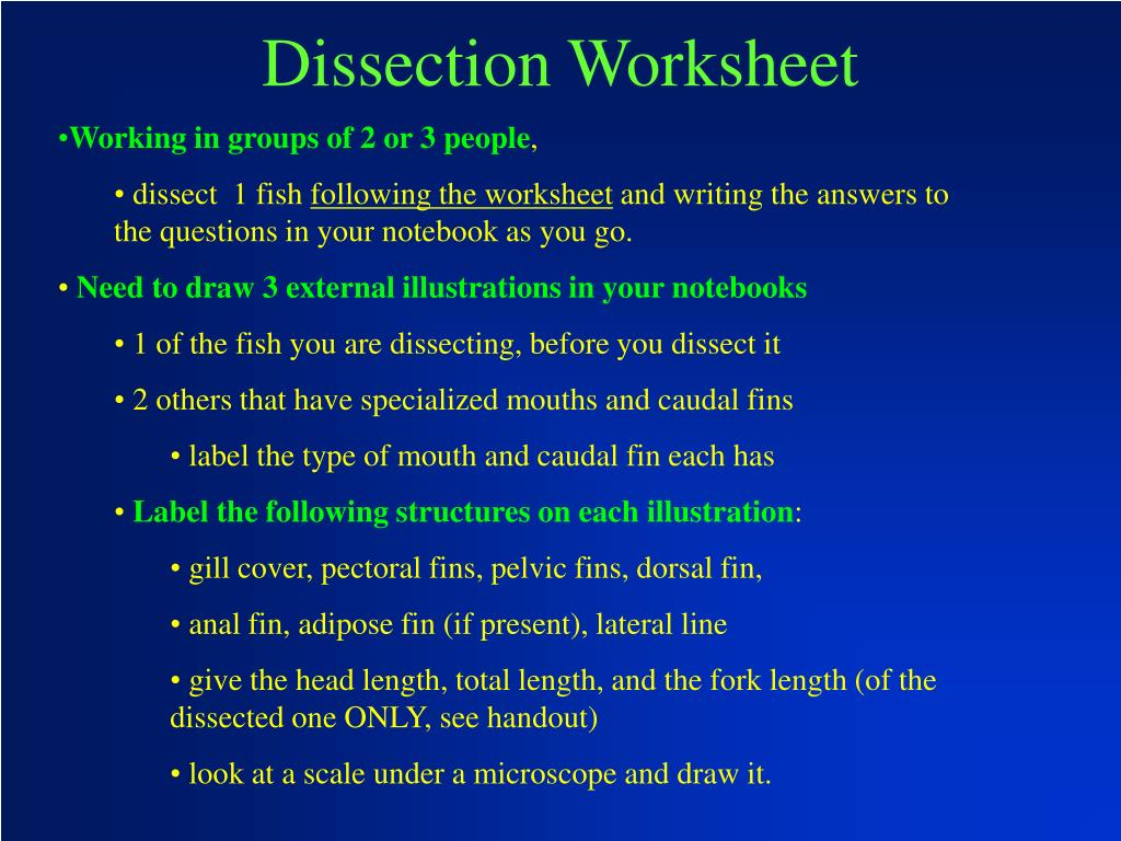 Dissection Worksheet