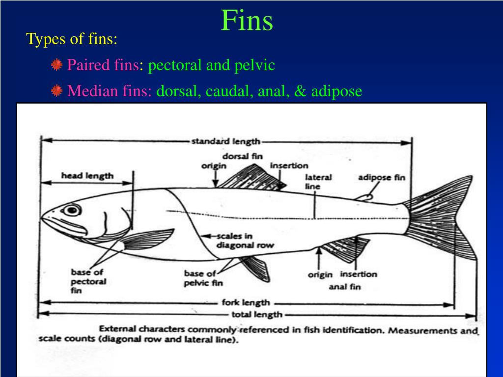 Types of fins: