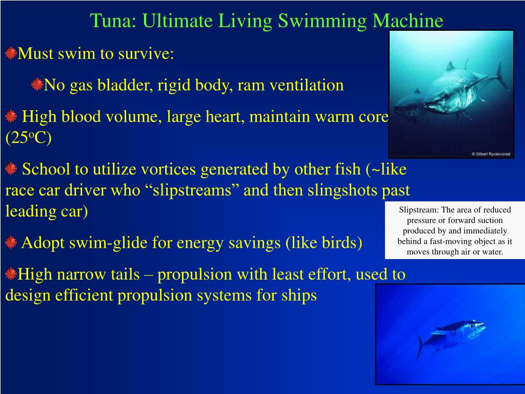 Tuna: Ultimate Living Swimming Machine