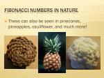 fibonacci numbers in nature13