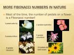 more fibonacci numbers in nature
