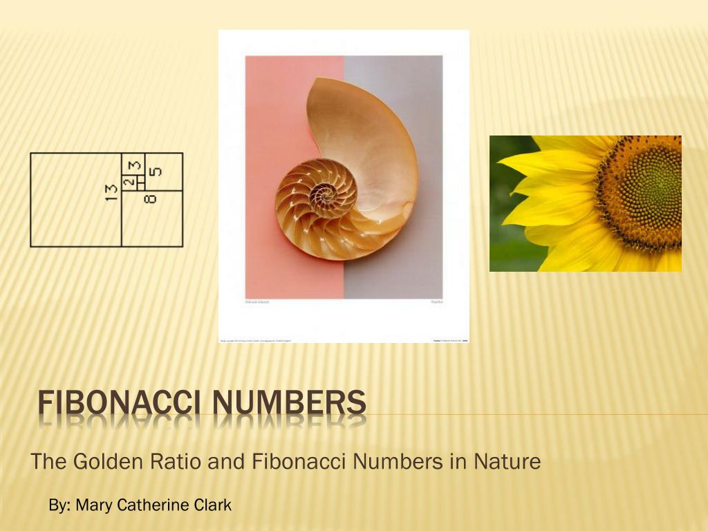 the golden ratio and fibonacci numbers in nature l.