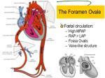 the foramen ovale
